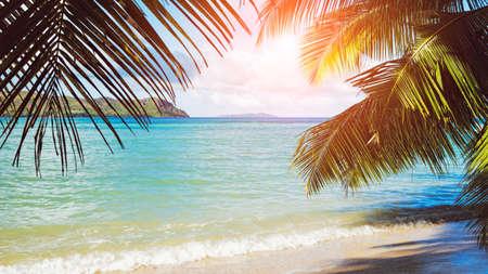 Palm and tropical beach of Praslin island, Seychelles