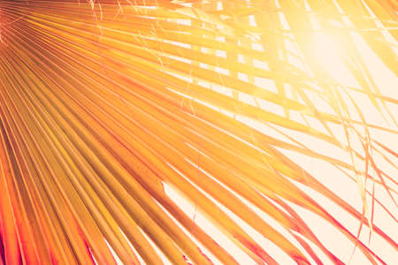 Coconut palm tree at tropical coast beach, made with Vintage Tones, Warm tones. Holiday concept.