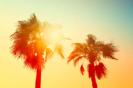 Silhouette of palm trees at sunset, vintage filter 免版税图像