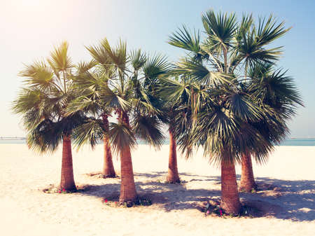 Coconut tree at tropical coast beach on Dubai Marina, made with Vintage Tones, Warm tones. Vacation weekend concept 免版税图像