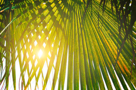 Green leaves of palm tree branches with sun rays. Vacation or travel holiday concept. 免版税图像
