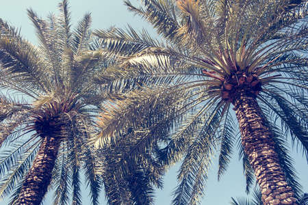 Green leaves of palm tree branches with sun rays. Vacation or travel concept. 免版税图像