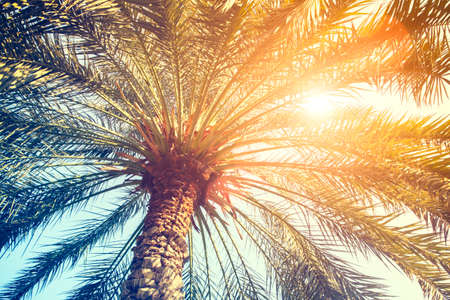 Palm trees against blue sky, Palm trees at tropical coast, vintage blue yellow toned and stylized, coconut tree, summer tree, retro style, Vacation or travel holiday concept.