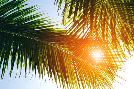 Palm trees against blue sky, Palm trees at tropical coast, vintage toned and stylized, coconut tree, summer tree, retro Stock fotó - 161137430