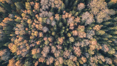 Aerial view of the autumn forest Stock fotó