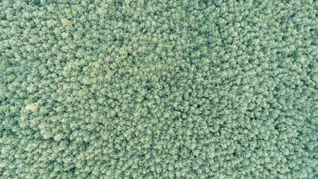 Aerial view of the summer forest Stock fotó - 161280424