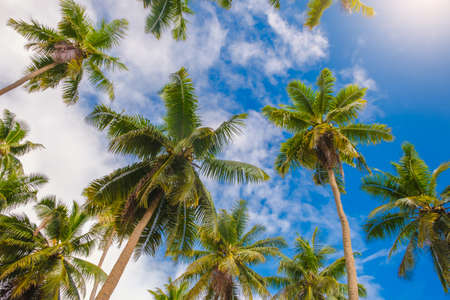 palm trees with a beautiful and clean blue sky in Los Angeles, California in horizontal