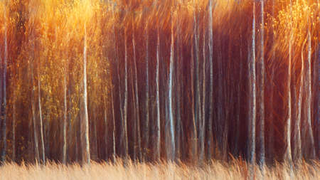 Autumnal textural forest scenic abstract background with motion blur, toned in vintage style