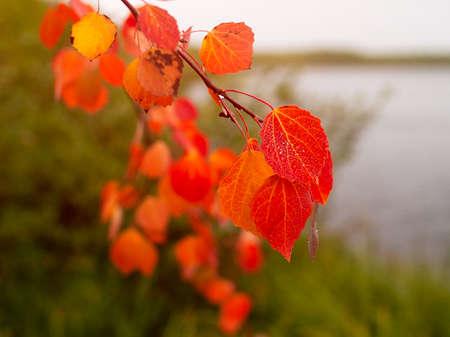 Autumn landscape. Autumn red leaves.
