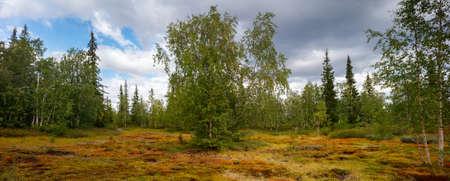 Summer panorama landscape o, north, siberian, tundra. Vacation travel concept