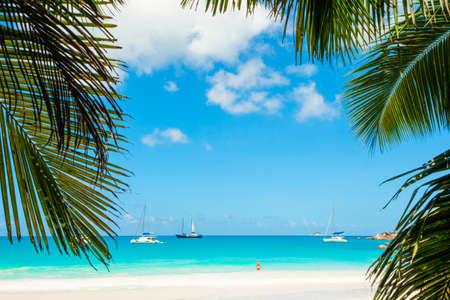 Palm and tropical beach Reklamní fotografie