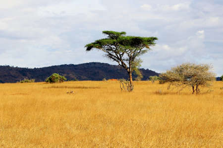 African savanna landscape in Kenya photo