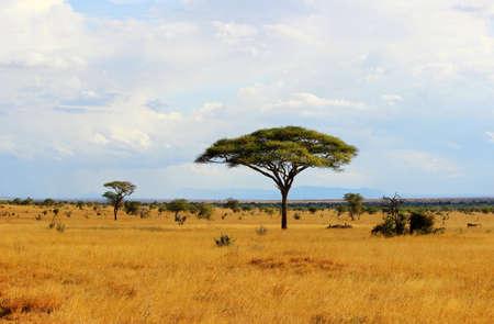 케냐의 아프리카 사바나의 풍경