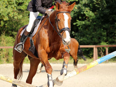 horse jumping: Horse jumping competition