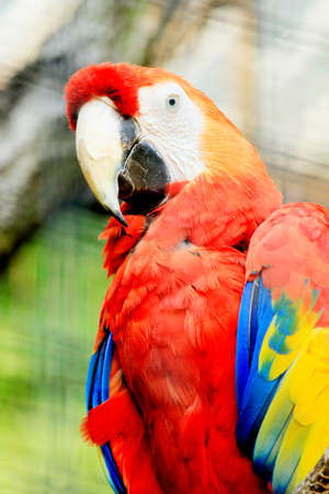Portrait of a colorful ara parrot photo