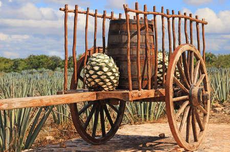 푸른 용설란 농장 앞의 오래 멕시코 트레일러