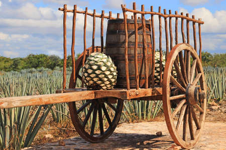 Old mexican trailer in front of blue agave plantation