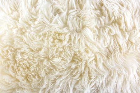 白い長毛毛皮の背景やテクスチャ