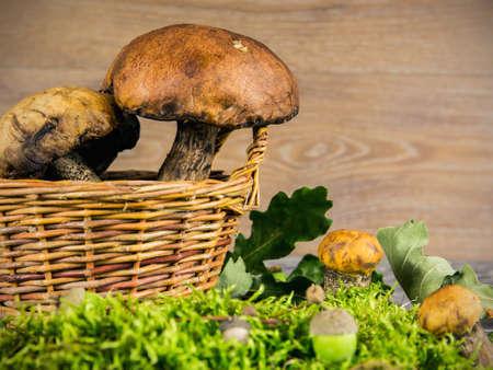 spunk: Setas del bosque frescas sobre fondo de madera Foto de archivo