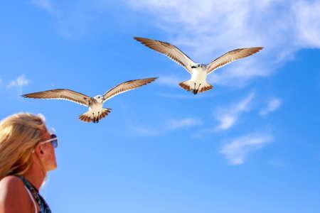 mujer mirando el horizonte: Chica rubia mirando gaviotas volando contra el fondo de cielo azul Foto de archivo