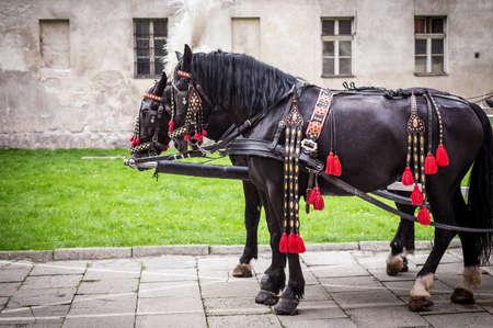 panache: Horses of wedding carriage in Cracow ( Krakow ), Poland