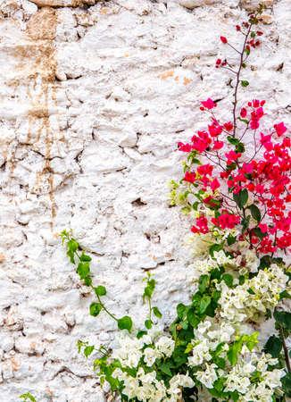 porous: White porous wall and flowers Stock Photo