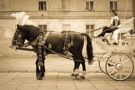 coachman: KRAKOW ( CRACOW ), POLAND - SEPTEMPER 06, 2014: young woman waiting in her wedding carriage for newlyweds in historic Kazimierz district in Krakow ( Cracow ), Poland Editorial