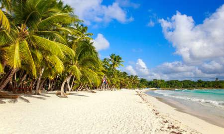 Beautiful caribbean beach on Saona island, Dominican Republic photo
