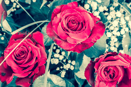 roses rouges: