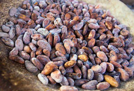 cocoa bean: Cocoa beans closeup
