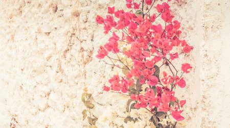 porous: White porous wall and flowers vintage background