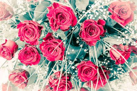 roses rouges: Gros plan de la belle fra�chement coup� bouquet de roses rouges