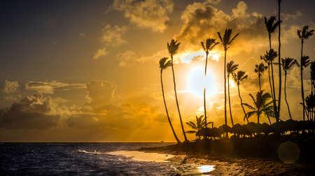 palmier: Beautiful sunrise over Caribbean sea in Dominican Republic