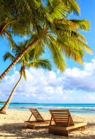 palmier: Belle plage des Cara�bes sur l'�le de Saona, R�publique dominicaine Banque d'images