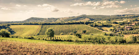 olive farm: Country landscape of tuscan hills in Italy Stock Photo