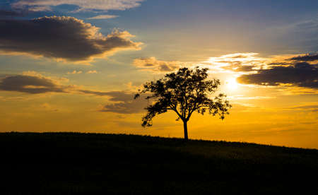 lonely tree: Silhouette of a lonely tree and beautiful sunset sky in the background