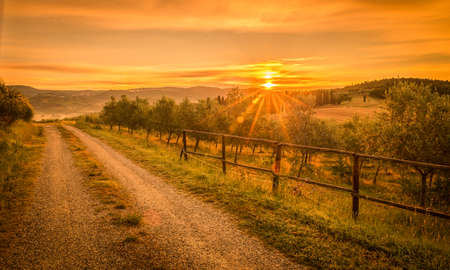 olive: Sunrise over olive field in Tuscany, Italy Stock Photo