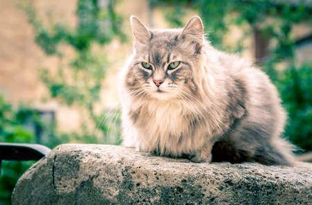 Cute long hair domestic cat on a wall Standard-Bild
