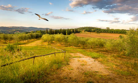birds in a tree: Blue sky an flying seagull over olive field in Tuscany