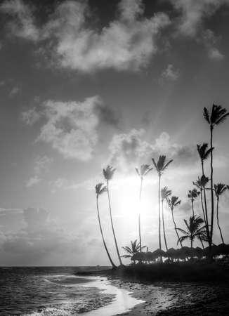 arboles blanco y negro: Sunrise over Caribbean sea and leaning palm trees in Dominican Republic Foto de archivo