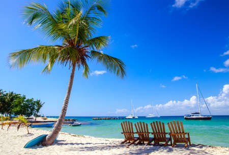 tropical tree: Beautiful caribbean beach on Saona island, Dominican Republic Stock Photo