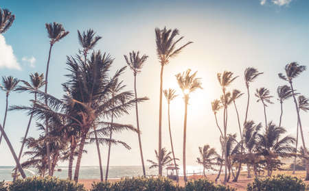palmtrees: Beautiful morning on the caribbean beach in Dominican Republic