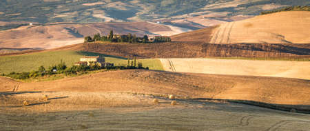 corn field: Country landscape of tuscan hills in the morning, Italy