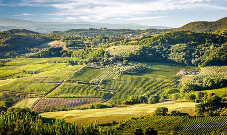 montepulciano: Aerial view of green vineyards in Tuscany, Italy Stock Photo