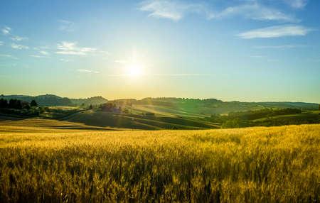 champ de mais: Belle lever de soleil sur les champs de la campagne toscane jaune