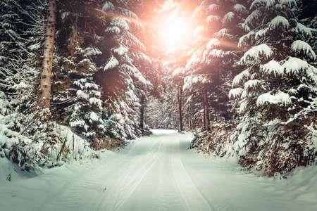 Winter landscape. Road covered in snow in dense forest. Standard-Bild