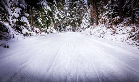 dense forest: Winter landscape. Road covered in snow in dense forest. Stock Photo