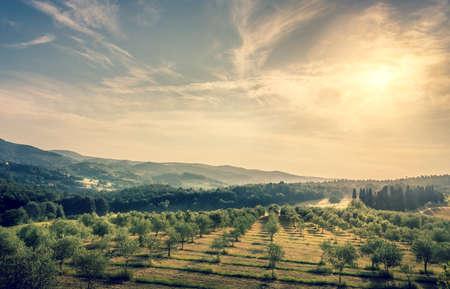 Céu azul sobre o campo de oliveiras na Toscana