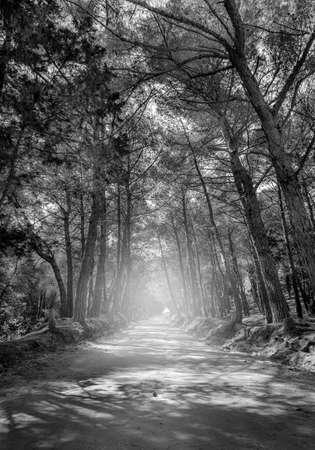 kos: Black and white forest road on greek Kos island Stock Photo