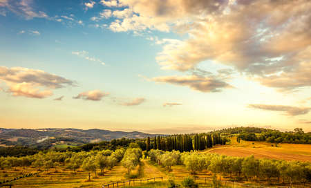 Blue sky over olive trees in Tuscany Foto de archivo